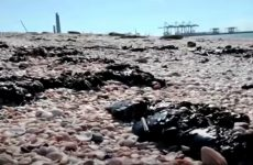 MASSIVE POLLUTION OF ISRAEL'S MEDITERRANEAN COAST – ACCIDENTAL, NEGLIGENCE, OR SABOTAGE?